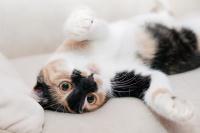 cat-649164_640 (002).jpg